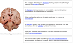Complete the following sentences describing various aspects of memory.