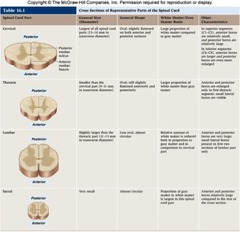 Anatomy Chapter 16 Spinal Cord and Spinal Nerves | Essay ...