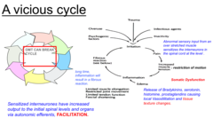 describe steps in vicious cycle of (pain) somatic dysfunction