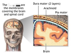 meninges of CNS
