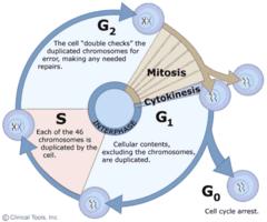 cytokinesis often but not always accompanies