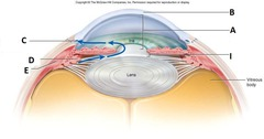 scleral venous sinus (Schlemm canal)