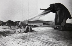 In Joseph Beuys's Coyote, I Like America and America Likes Me, the artist: