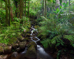 Name some varieties of tropical forests.