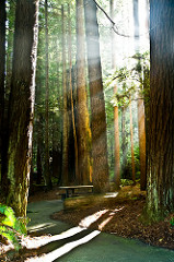 Old-growth forests/frontier forests