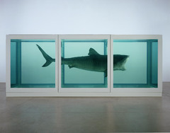 The Physical Impossibility of Death in the Mind of Someone Living, by Damien Hirst, is an example of the broad range of materials that can be used in a work of art. It presents a ________ suspended in a tank of formaldehyde.