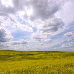 Why are prairies ideal subjects for ecological restoration?